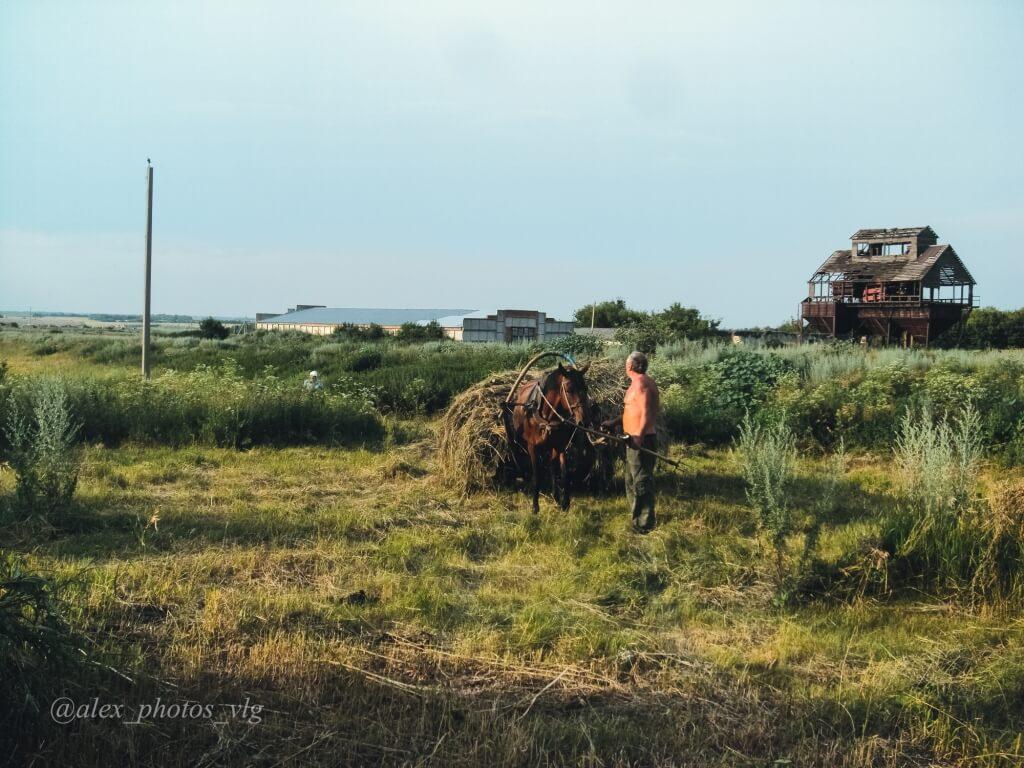 Сенокос в деревне