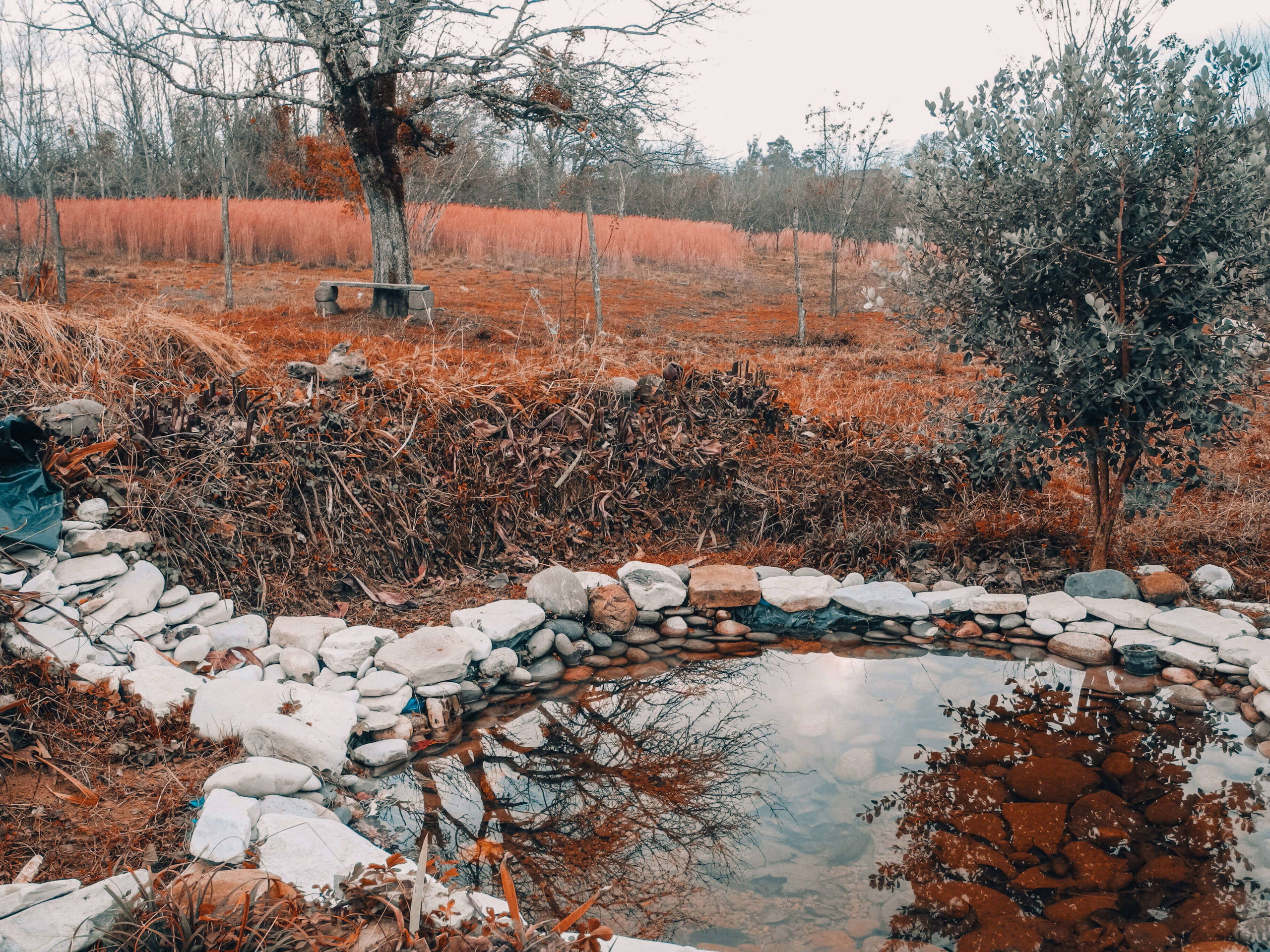 Жизнь на земле. Опыт пермакультуры