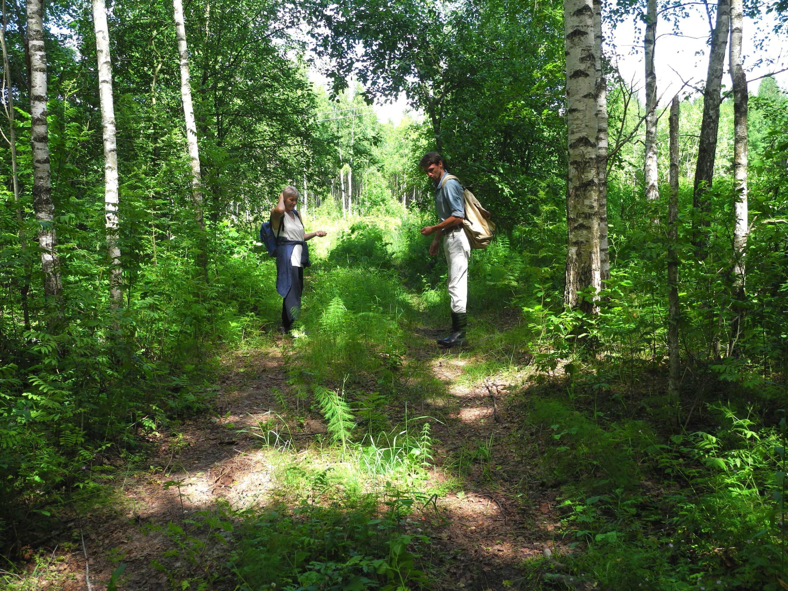 общение в лесу