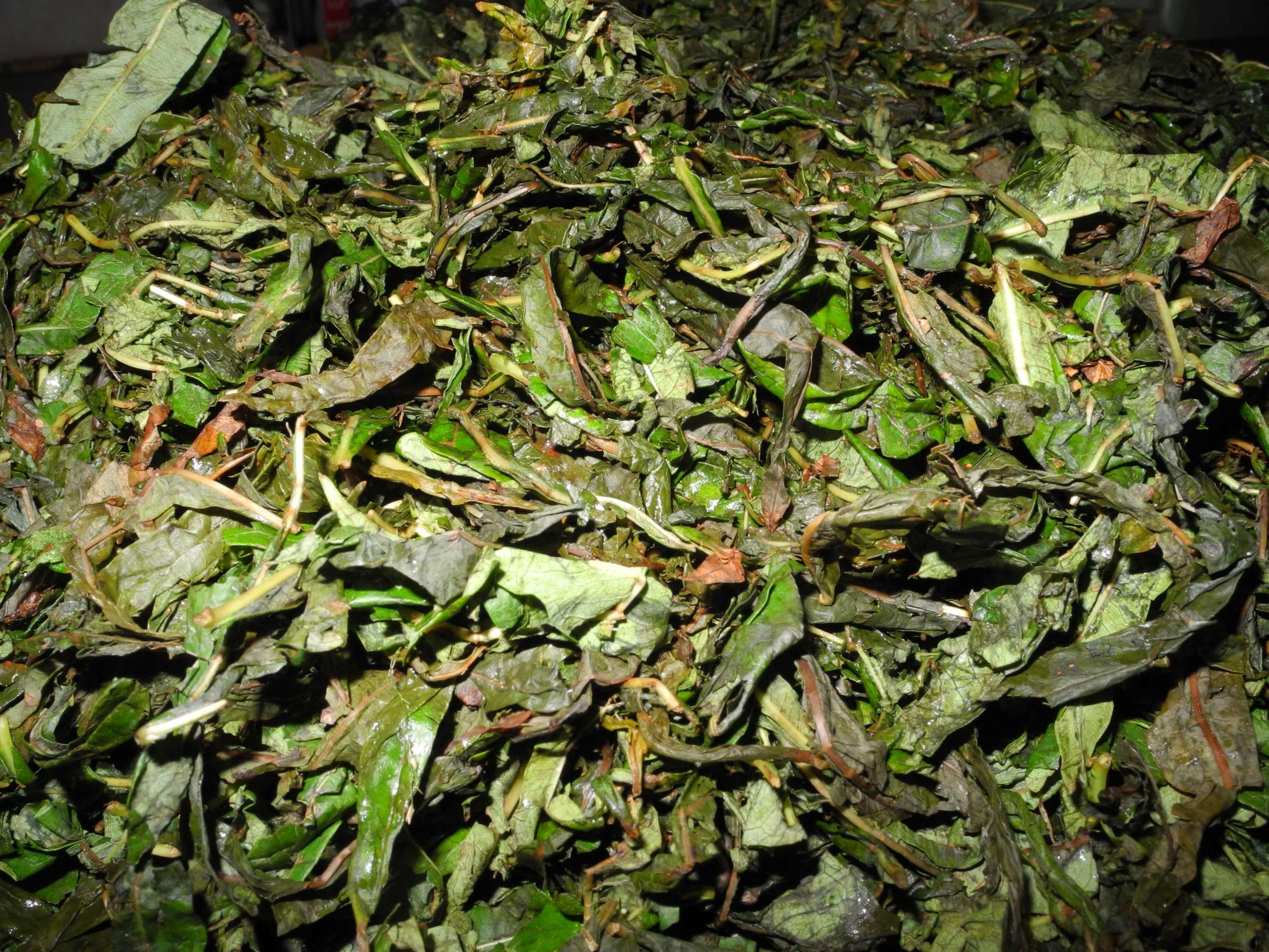 Ферментация иван-чая в домашних условиях