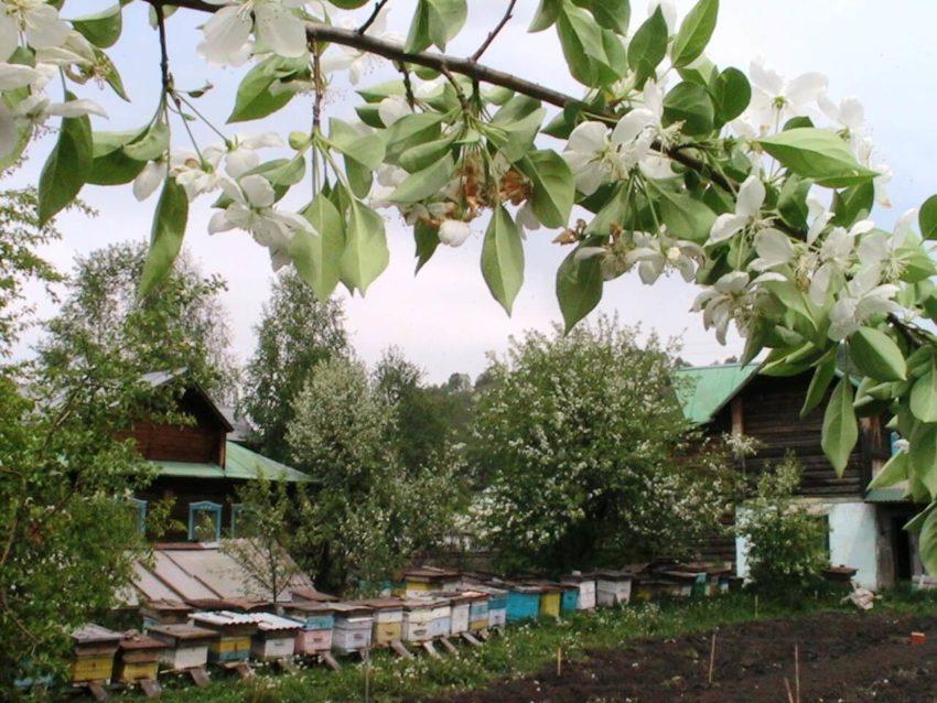Пасека у деревни