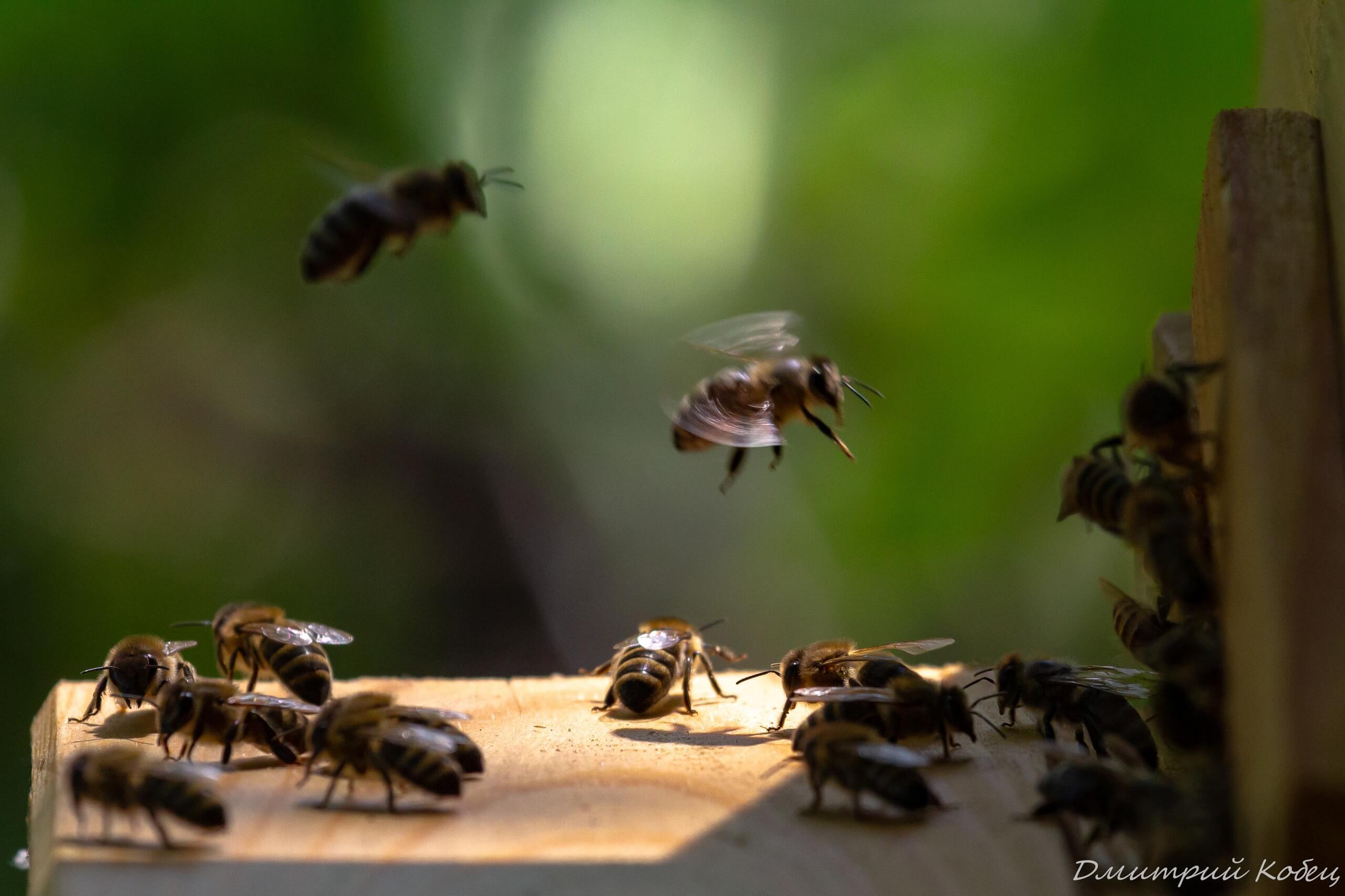 Пчёлы в деревне
