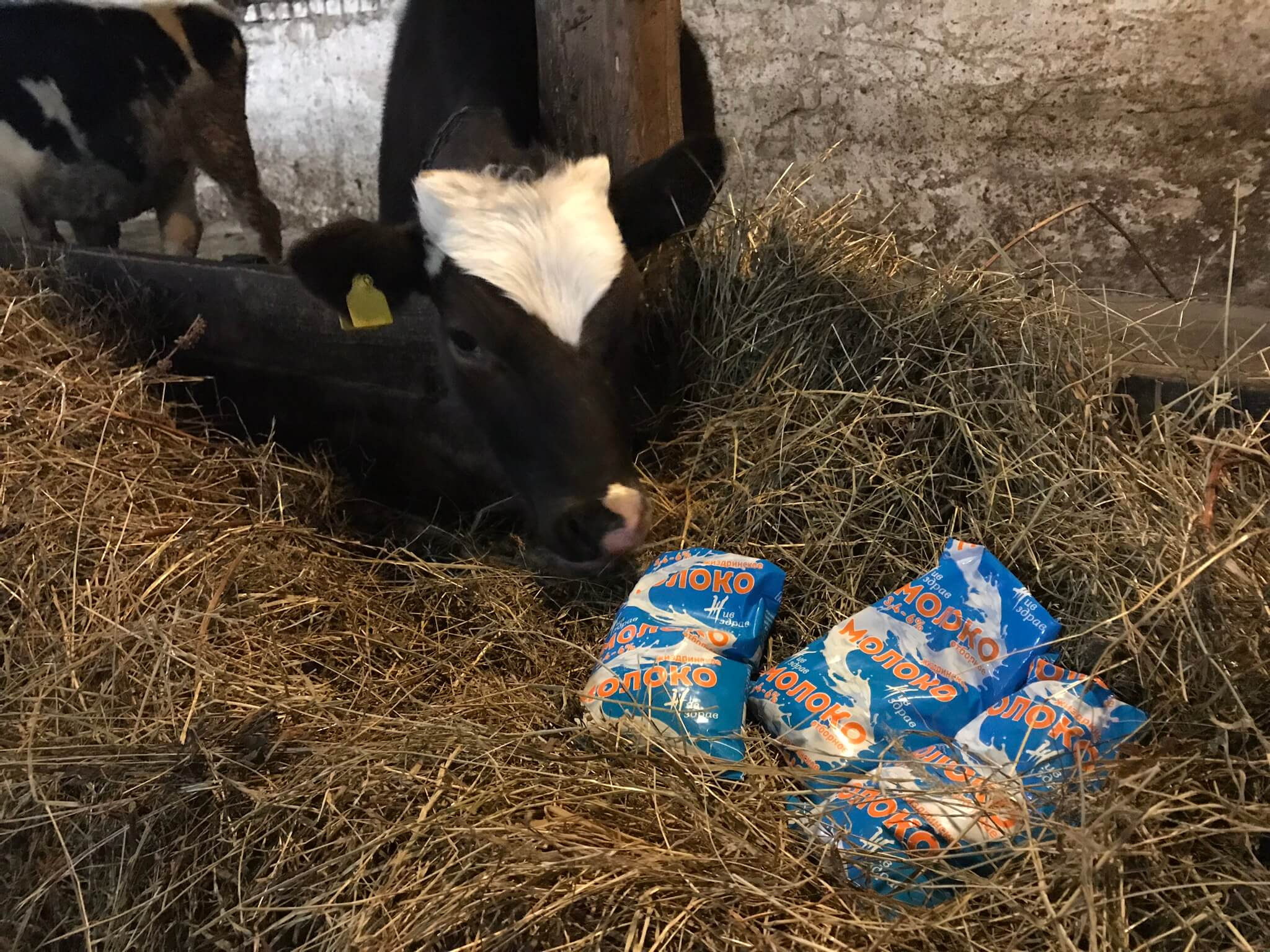 Молочный бизнес