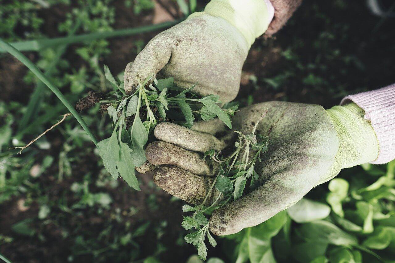 Профессии сельского хозяйства - Агроном