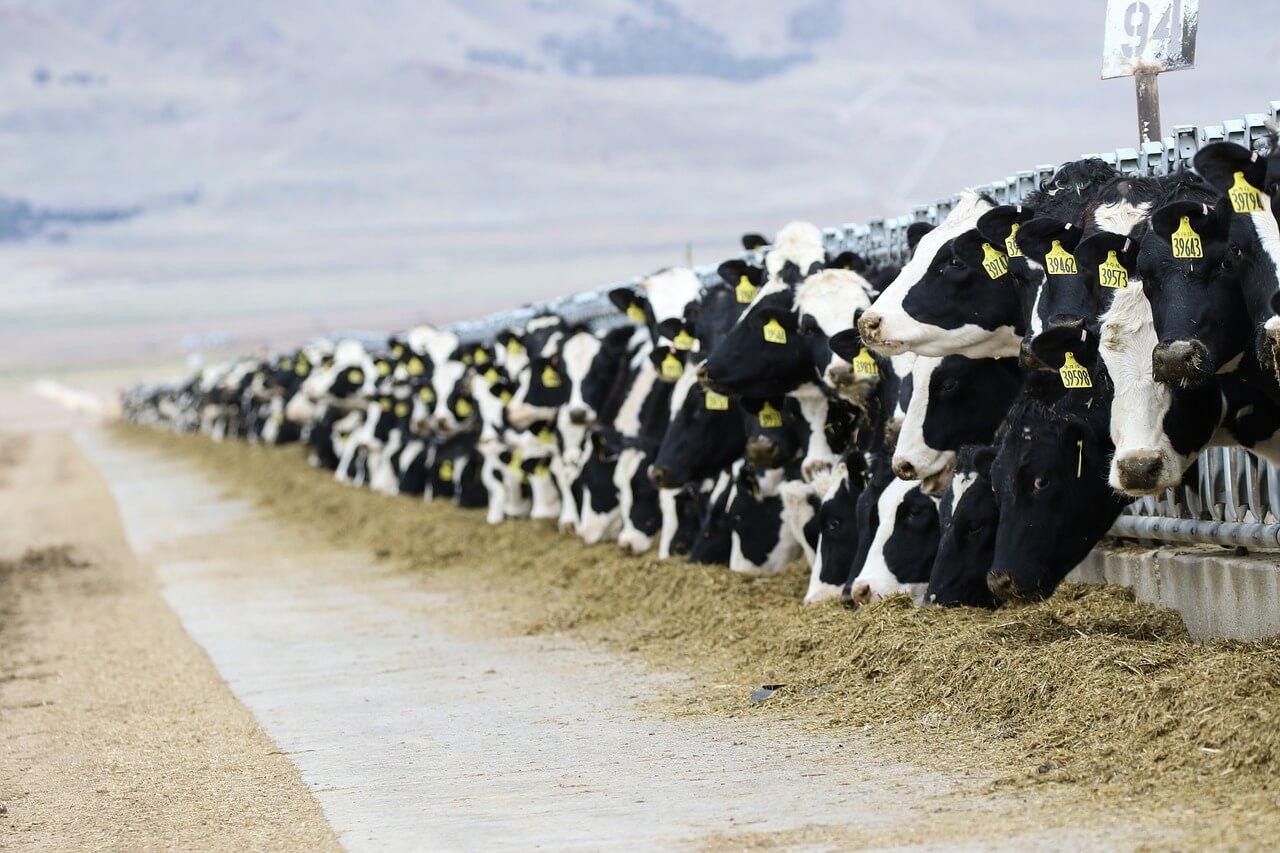 Профессии сельского хозяйства - Оператор механизированных ферм