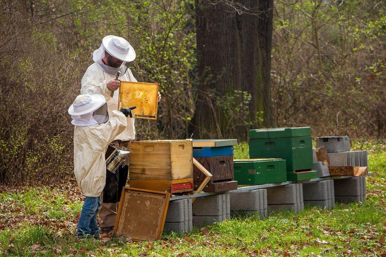 Профессии сельского хозяйства - Пчеловод