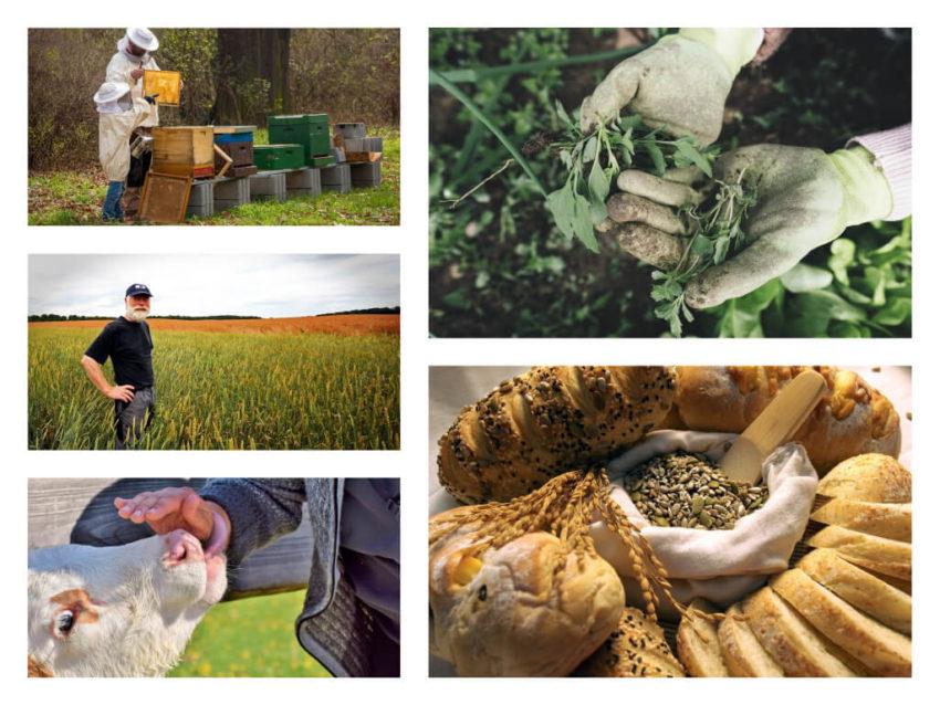 Профессии сельского хозяйства
