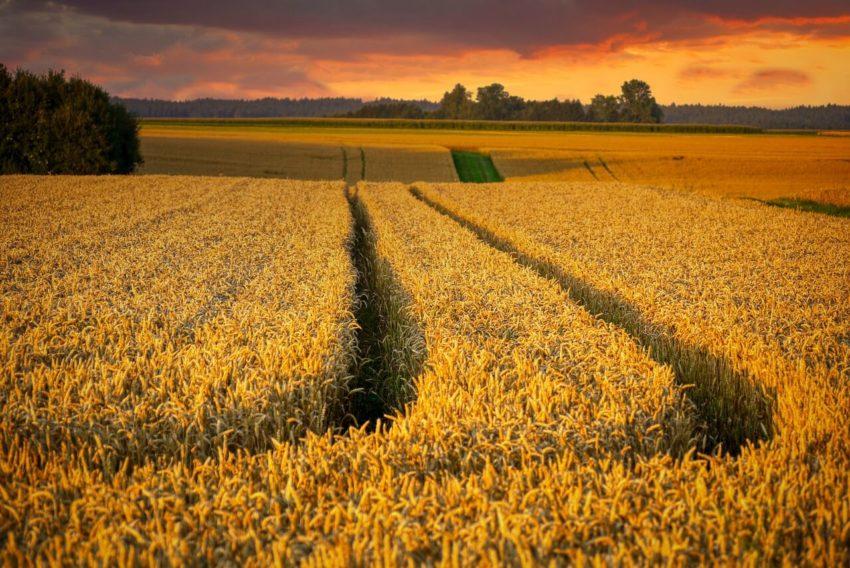 Экономика сельского хозяйства