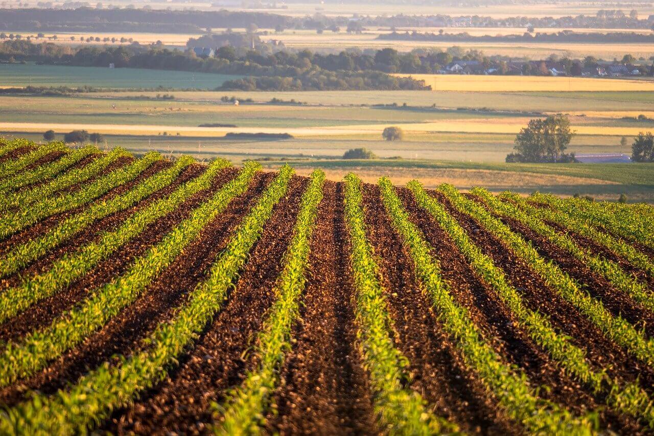 Специфические особенности отрасли сельского хозяйства