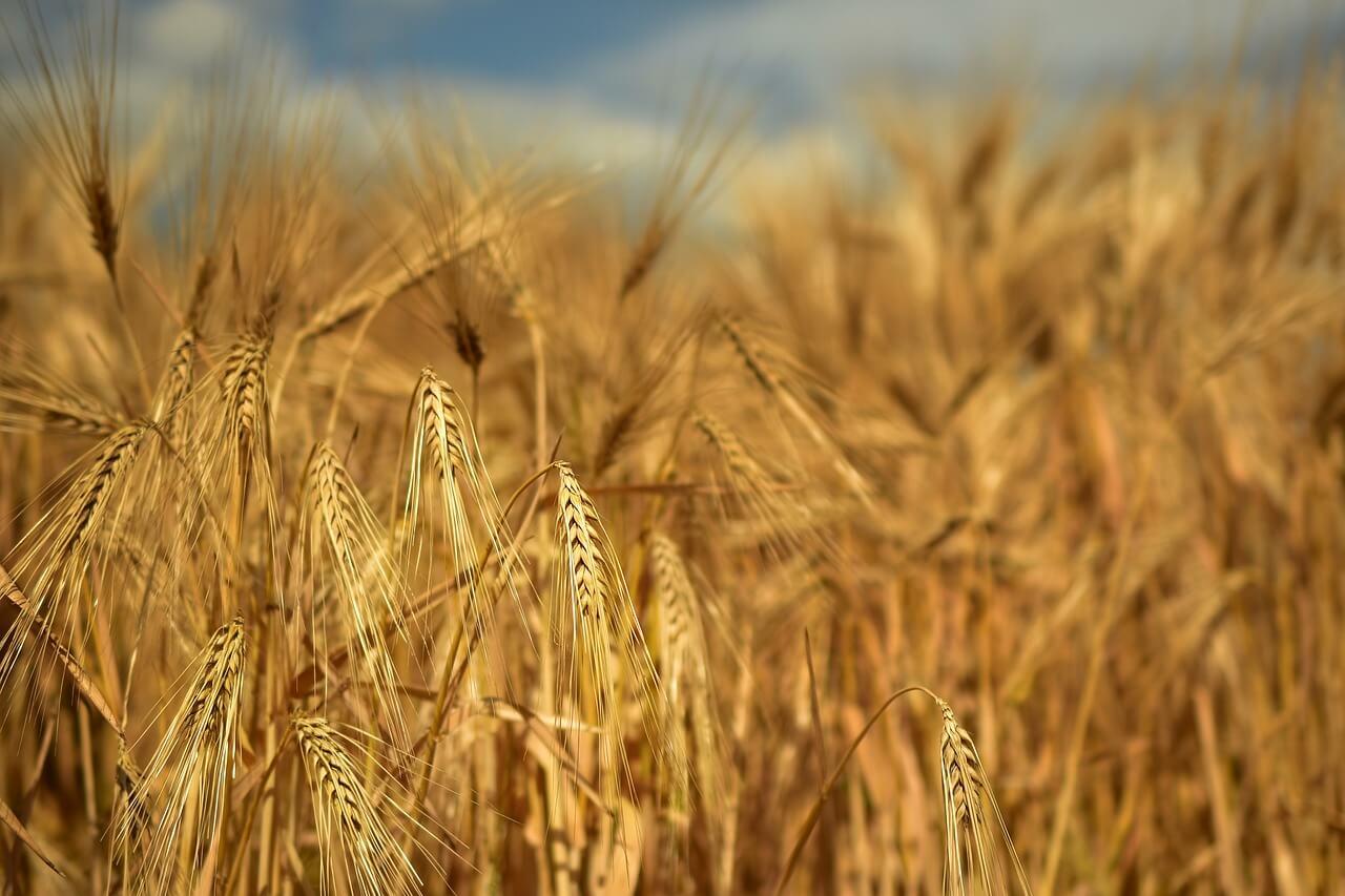 Ресурсы сельского хозяйства