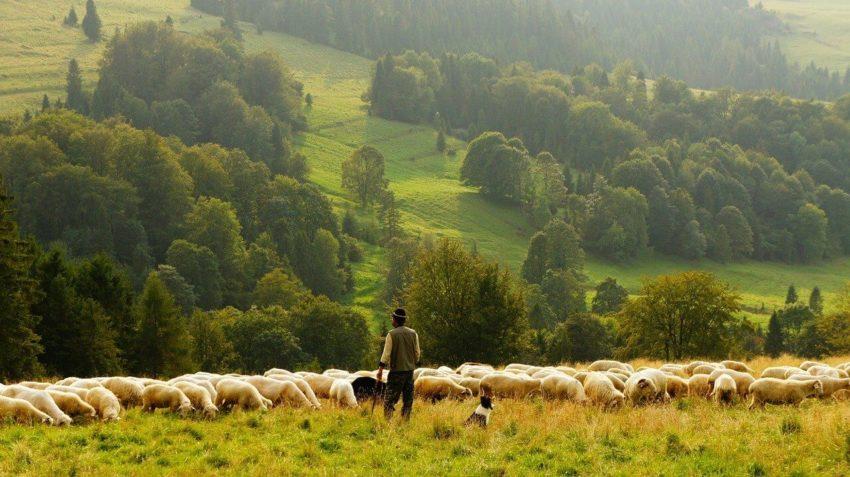Типы сельского хозяйства