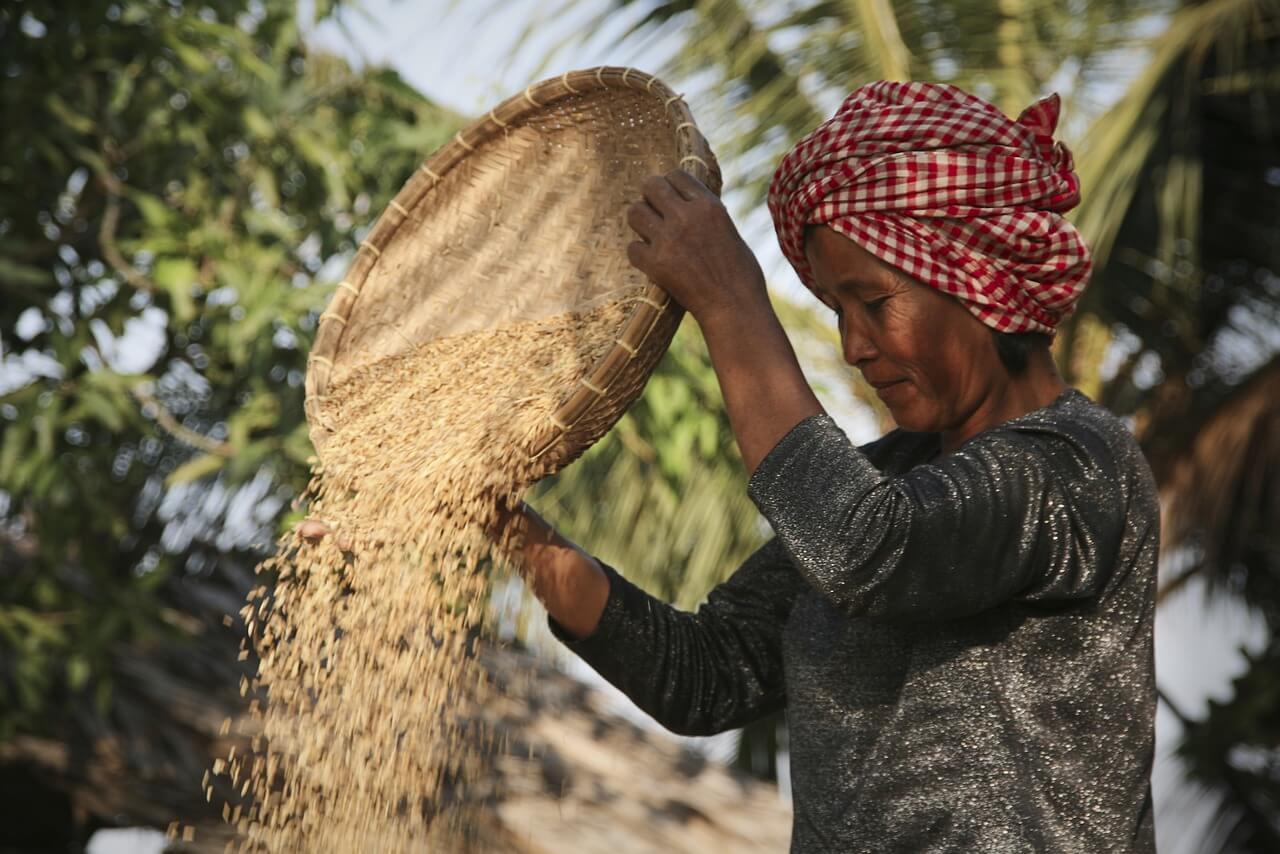 Традиционное сельское хозяйство